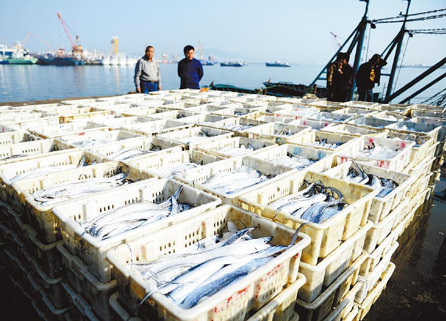 山东黄渤海海域休渔期结束 迎来海洋渔货丰产季