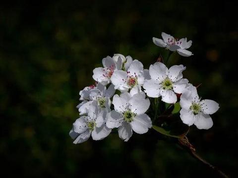 十月下旬,四生肖桃花运势不可挡,良缘扑面而来,将找到真爱