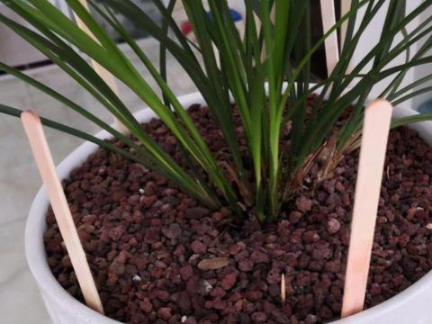 别再固定时间给花浇水了!学会3种小方法,不再干根、烂根