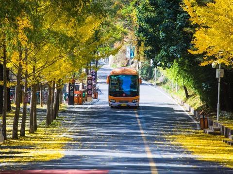 河南洛阳白云山有一处银杏林,这里有成片的银杏树,惊艳了秋天