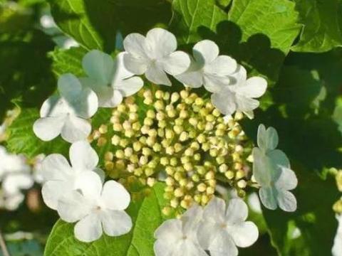这两种好东西养花最好用,不仅能给花儿美容,还不会烂根