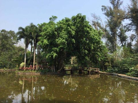 中国首家大型热带野生动植物园,园内景观自然天成,珍禽异兽齐聚