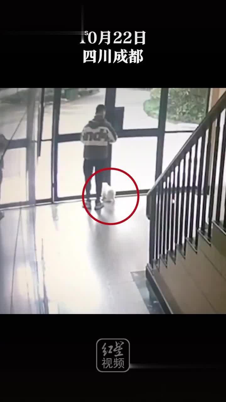 外卖骑手带走宠物狗?监控显示狗跟随出门,算不算偷?