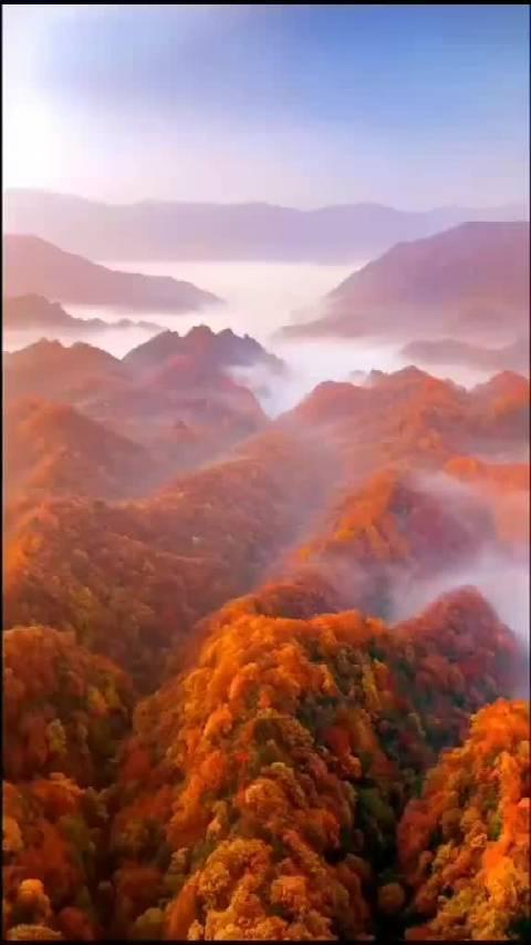 燃烧的山谷,又见四川山里红!
