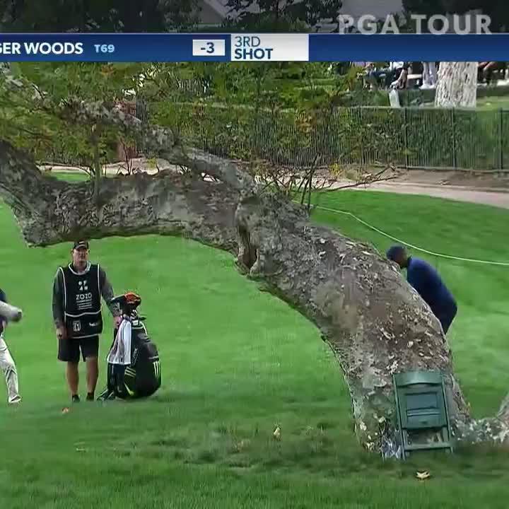 伍兹这救球完全把树当空气一样