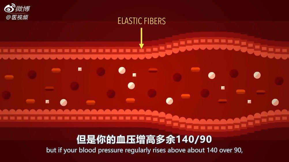 TED科普:血压是如何产生的?