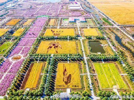 电影《我和我的家乡》里的稻田画……