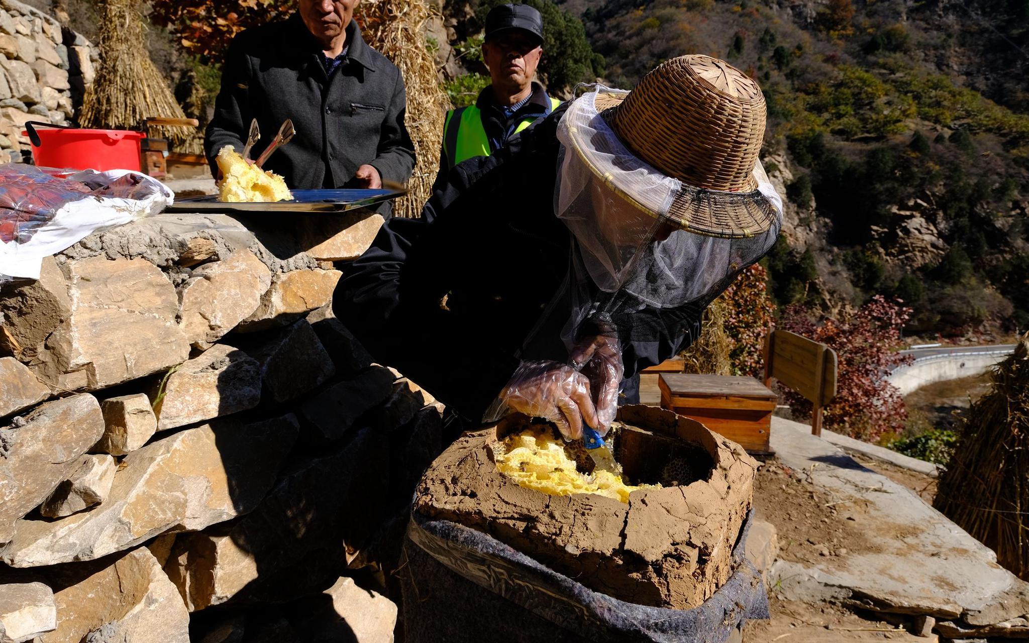 蜂农从蜂桶中割取蜂蜜。新京报记者 王巍 摄