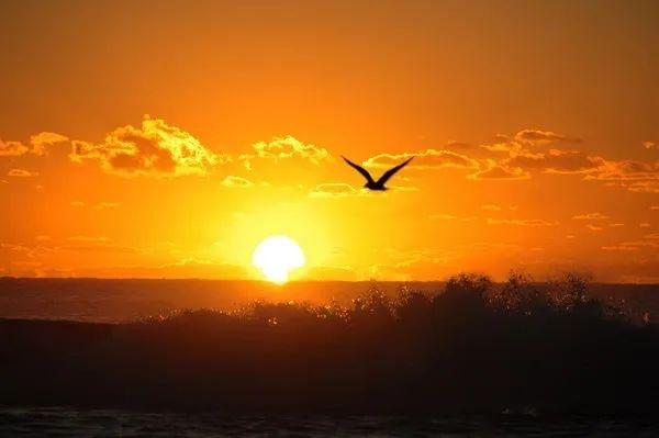 今日重阳丨夕阳红 朝阳美 蓄力税务共发展