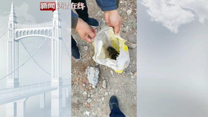 绥芬河:工地惊现大蛇,民警及时处理!