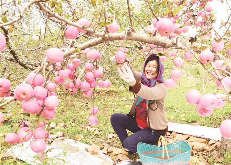 沂源县举办阿里巴巴数字农业集运加工中心开仓仪式暨第十届山东沂源苹果节开幕式