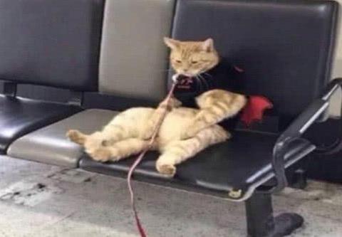超级懂事的大橘猫,坐在凳子上静待主人,只是表情不淡定