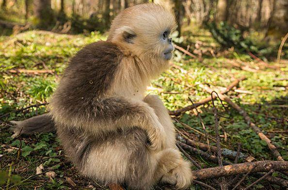 """惹不起的生肖猴:10月27是你最大的""""转运日"""",后半生变""""金""""猴"""