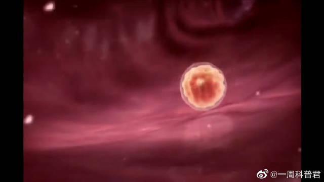 科普动画,从受精卵到婴儿的1到9周,真的不得不感叹生命的神奇