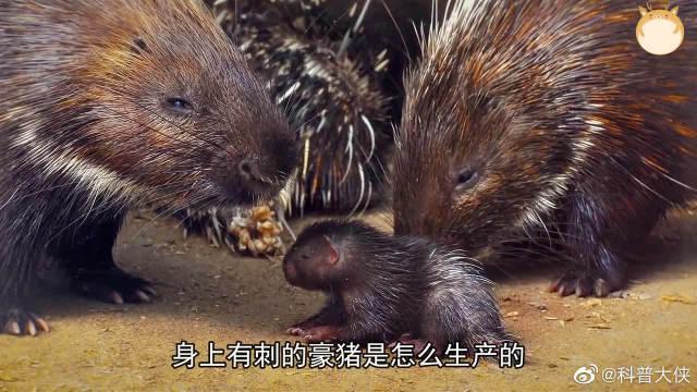带你了解8个令人难以置信的动物分娩方式~