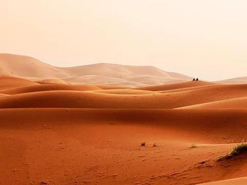 沙漠真的是一片荒芜?研究表明:仅撒哈拉沙漠就有18亿棵树!