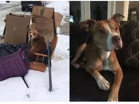 前主人搬家嫌狗狗麻烦,连同旧家具一起扔掉,它做错什么了