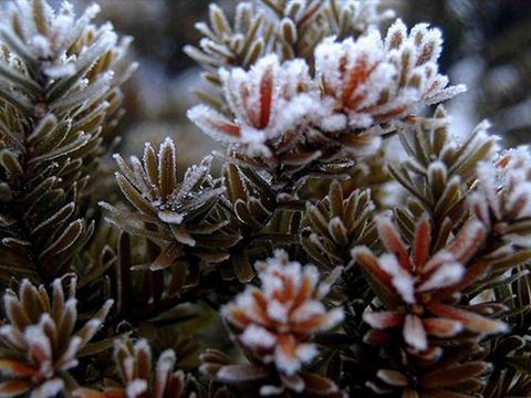 霜降到了,农民应抓紧小麦播种,注意三叶前适当追肥