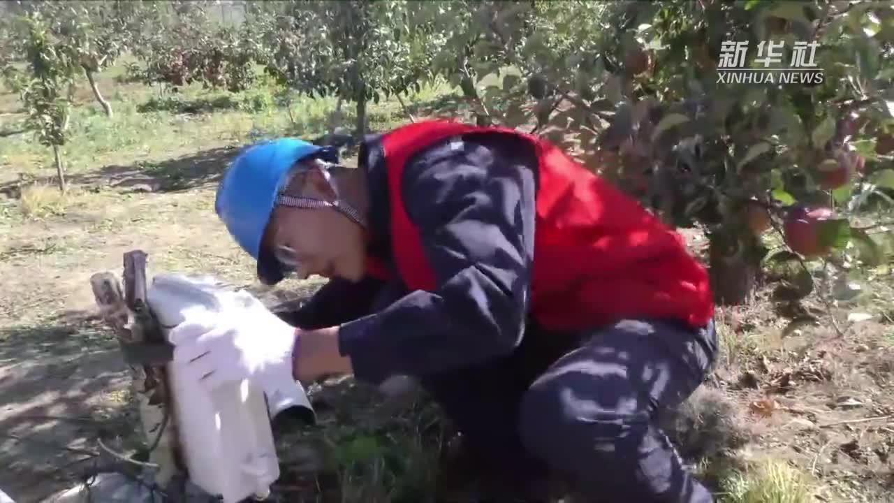 吉林延边:对接到户保供电 助力果农秋收
