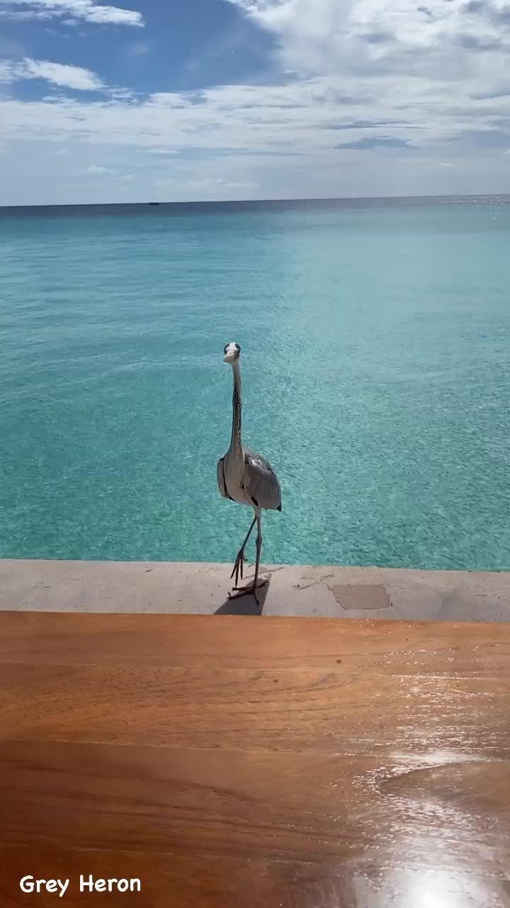 隆多更新动态分享了一只水鸟 🎥隆指导旅行日常