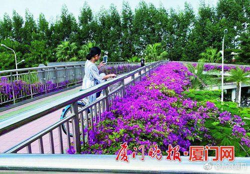 """翔安""""紫衣天桥""""刷屏朋友圈未来或将全区推广"""