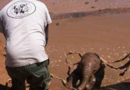 小象掉落池塘无法起身,游客纷纷伸出援助之手