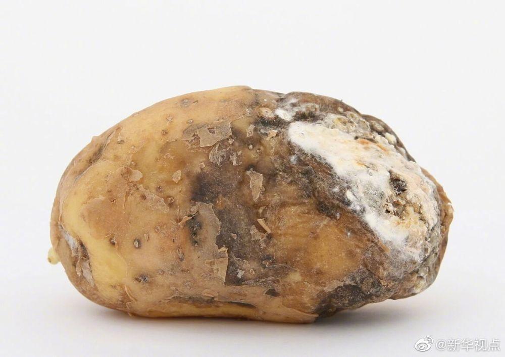 发霉的东西千万别吃了!专家提醒:黄曲霉素是肝癌形成主要风险之一
