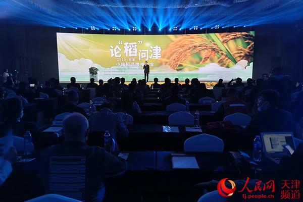 天津全市小站稻种植面积已达80万亩以上