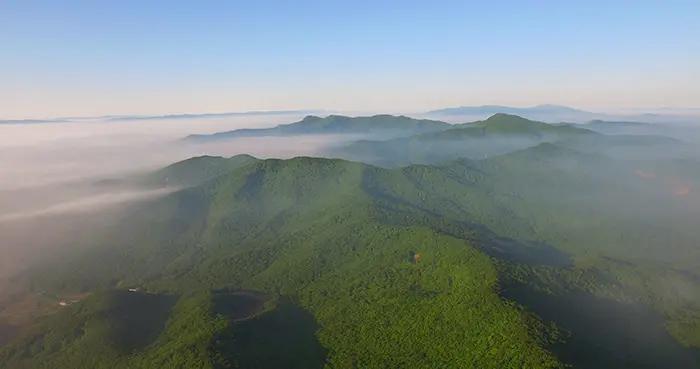 完成造林288万亩,村屯绿化2762个!吉林省绿化美化工作取得显著成效