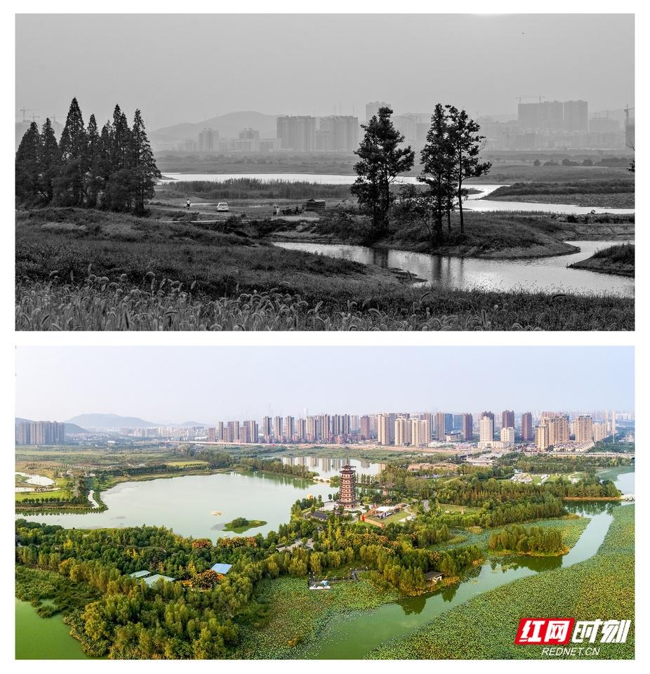 """洋湖湿地:建一座""""绿色银行"""",用水世界撑起梦想城"""