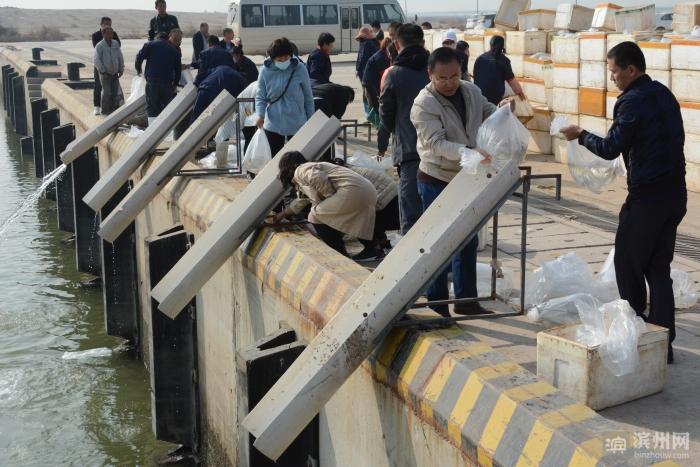 滨州:保护海域生态 近40万尾半滑舌鳎鱼苗放流入渤海湾