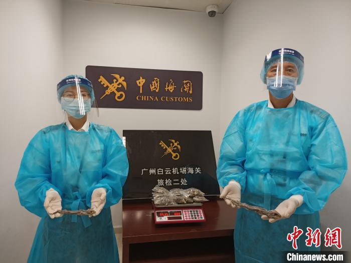 旅客携585克壁虎干做煲汤料入境 在广州白云机场被查