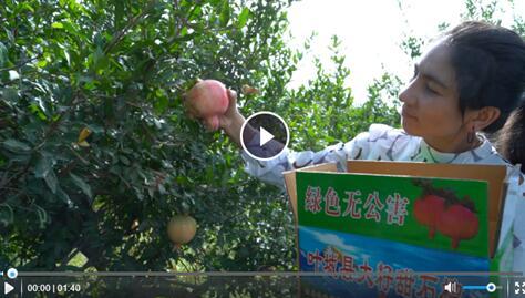 我在南疆丨饰品销售的园丁生活