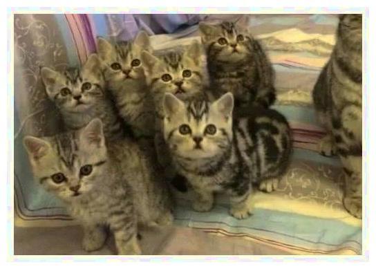 母猫一次给主人生了一串小猫,朋友夸个不停,主人在旁忧心忡忡