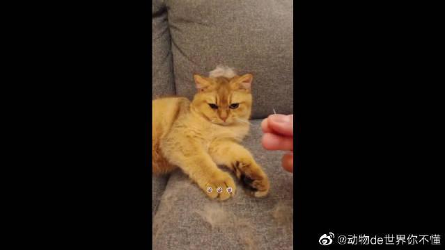 这猫咪应该不会记仇,我就是想给它梳一下毛,这么听话的小猫咪!