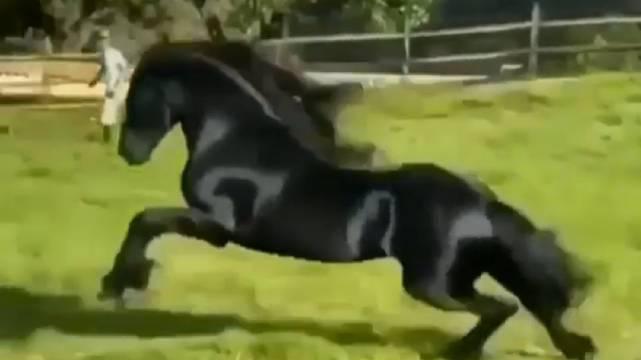 这就是传说中的骏马吧