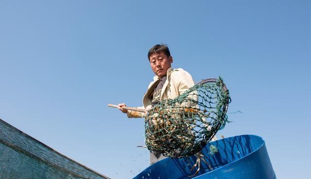 西顺河镇:重阳将至 洪泽湖大闸蟹迎来销售高峰