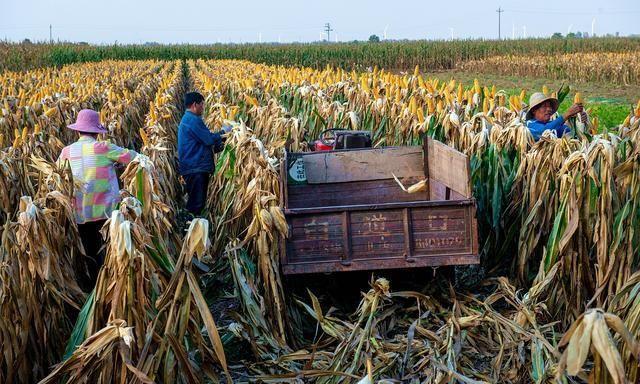农民老铁的好消息,玉米价格依旧是上涨!附:10月27日玉米价格