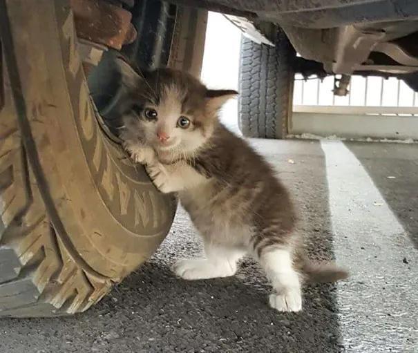 男子在车底发现一只流浪小奶猫,温暖的故事开始了