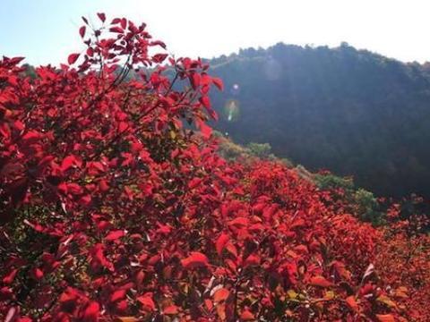 别只知道太原崛围山,这个地方更是美不胜收,这比崛围山还要美