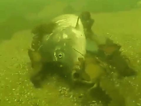 男子在池塘钓鱼,一整天都没咬钩,潜到水下看清后不淡定啦