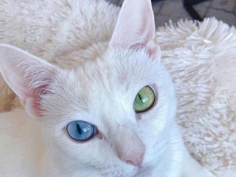 一只被遗弃的残疾双色瞳孔猫,被新主人收养后,摇身一变成治网红