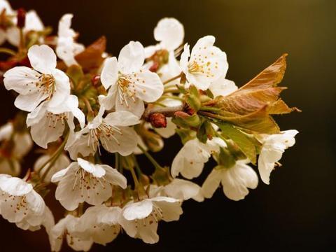 下个月,缘分与桃花飞蛾扑火,愿好好珍惜感情的四大生肖!