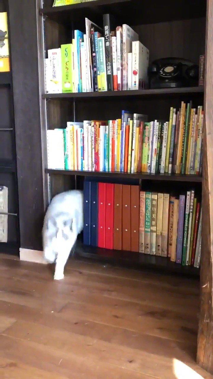 不断钻出猫猫的书架!by/twitter/yamaneko_coffe