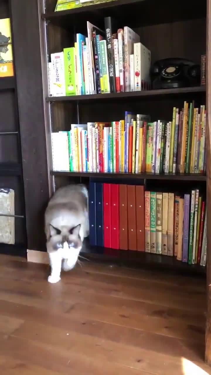 不断钻出猫猫的书架,你喜欢吗?