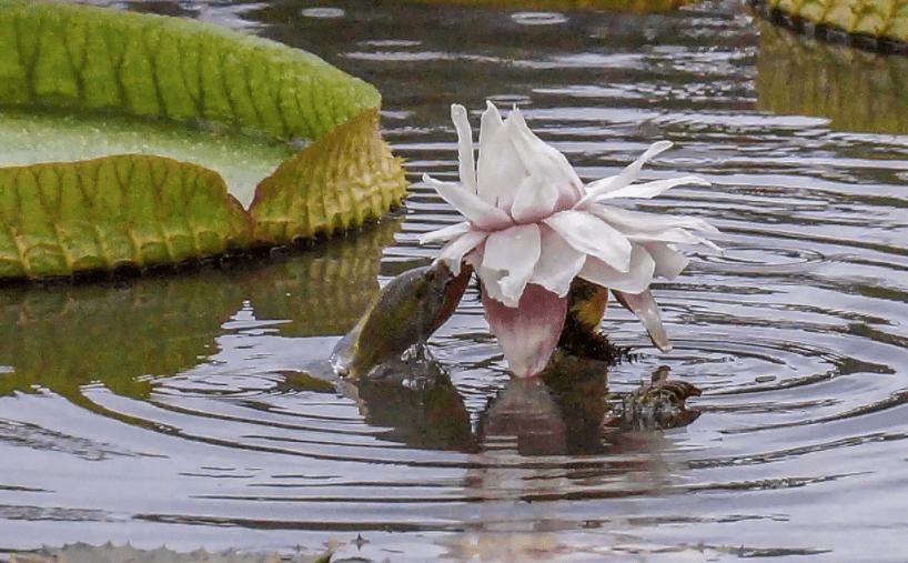 男子公园拍照,发现池塘不对劲,照片放大后,他开怀大笑