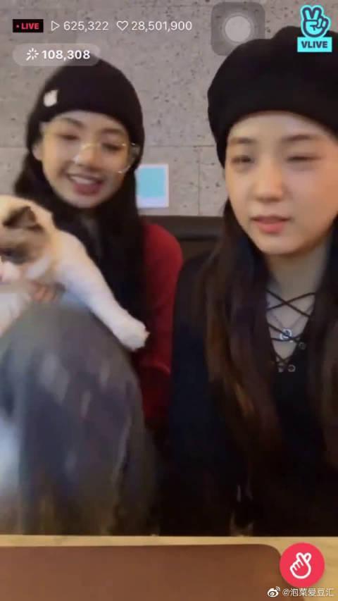 Lisa带猫:问猫的心理阴影,我怎么就不知道跑快点