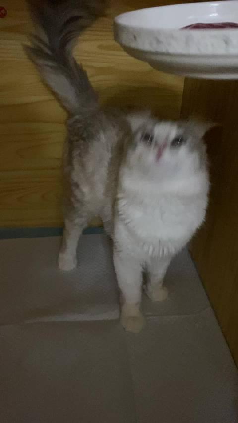 (╯°Д°)╯︵┻━┻ 有的猫要不是长得可爱我早就把他剁了