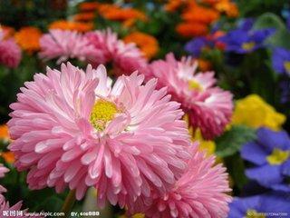 命藏金贵,11月财通八达,桃花朵朵,财富如云,全家喜气洋洋!