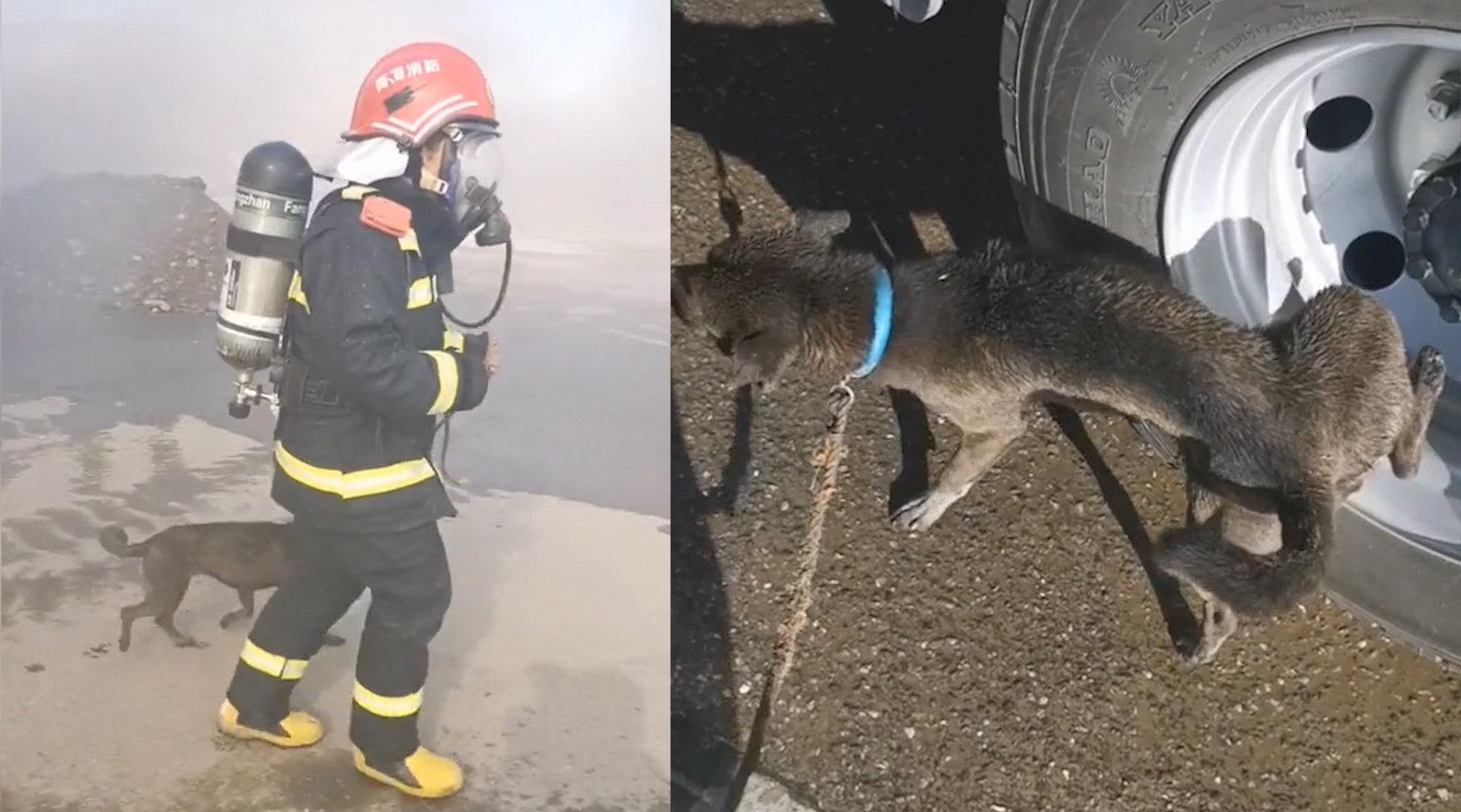狗子获救后对着消防车做记号消防员小哥全副武装进火场救出小黑狗